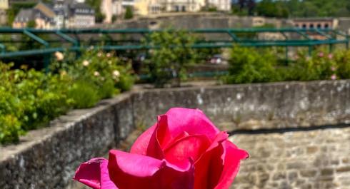 """Le jardin des roses """"Rousegaart op de Rondellen"""""""
